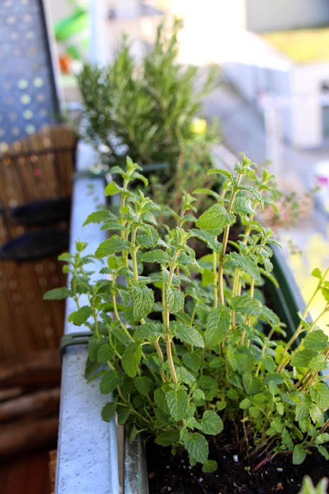 Balkon Blumen Urban Gardening