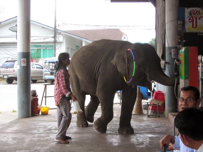 Elefant am Busbahnhof in Takua Pa, Thailand