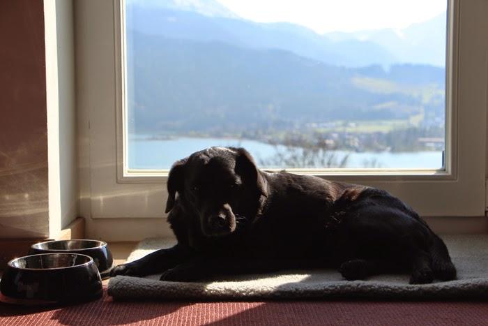 Das Tegernsee - Wallberg Hunde