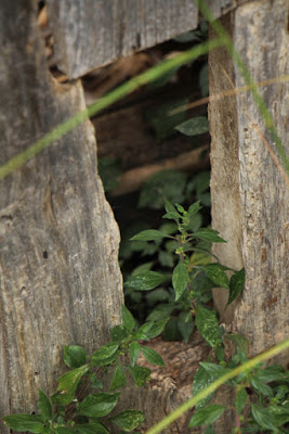 Verlassene Ruinen in Millà