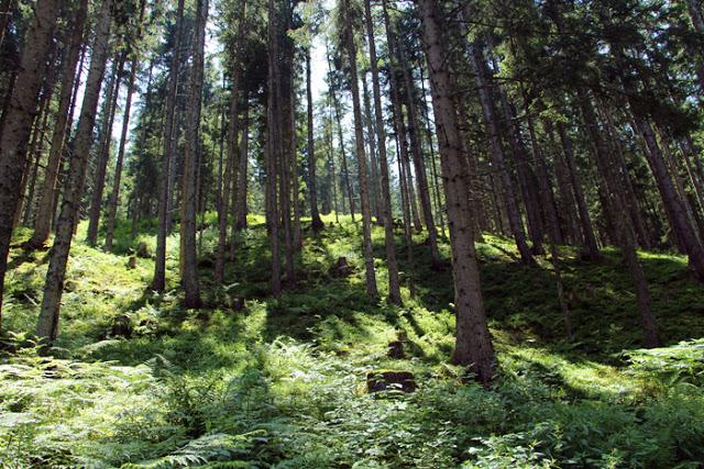 Waldwanderung Leogang