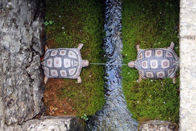 Schildkröten Wasserspiele Hellbrunn