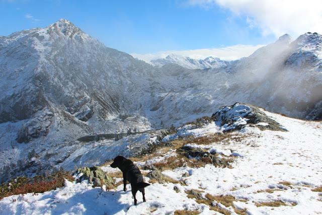 Höhenweg Reiteralm mit Hund
