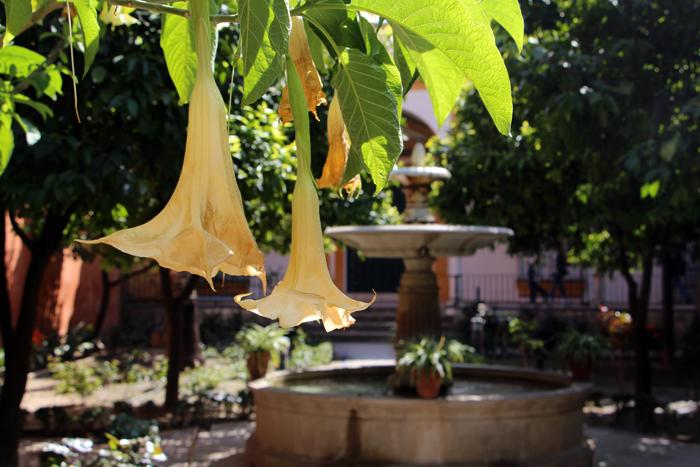 Garten des Real Alcazar in Sevilla
