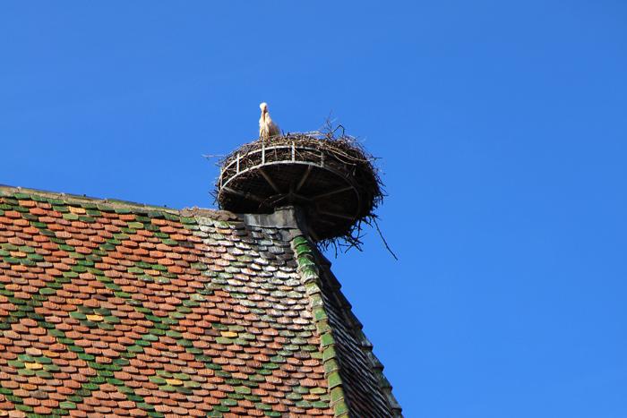 Storch in Colmar
