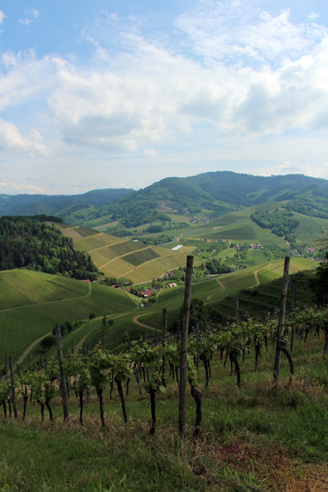 Weinpanorama-Wanderweg Durbach