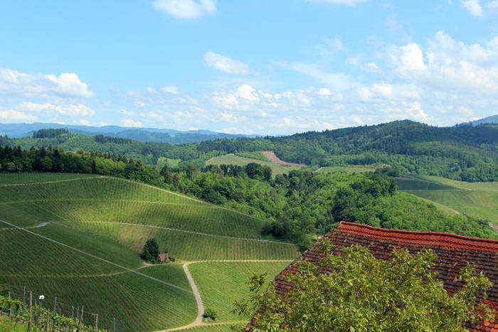 Durbach Weinpanorama-Wanderweg