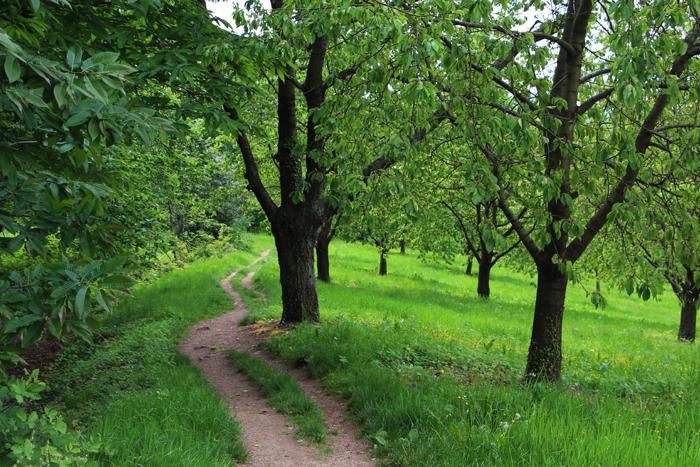 Apfelbaum-Wiesen