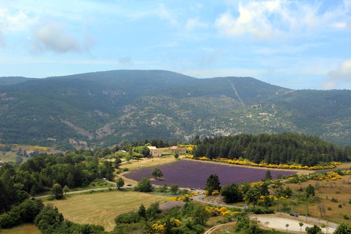 Lavendelfeld bei Aurel, Provence