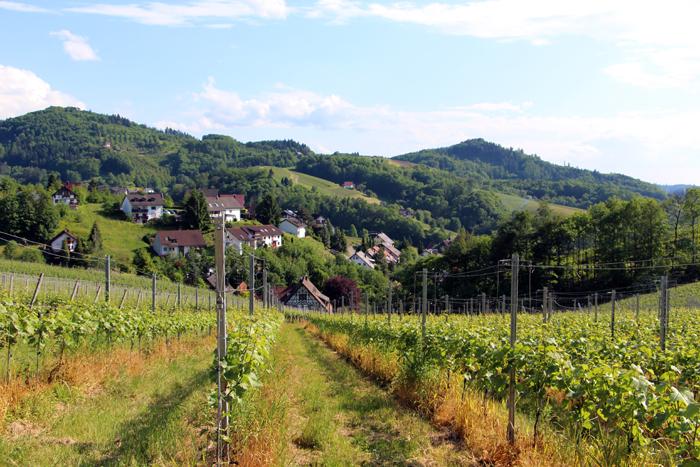 Weinpanorama Wanderweg: Alde Gott Genießerpfad