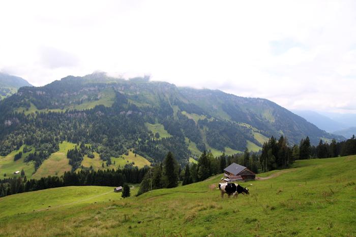 Bregenzerwald - Vorsäß Schönenbach