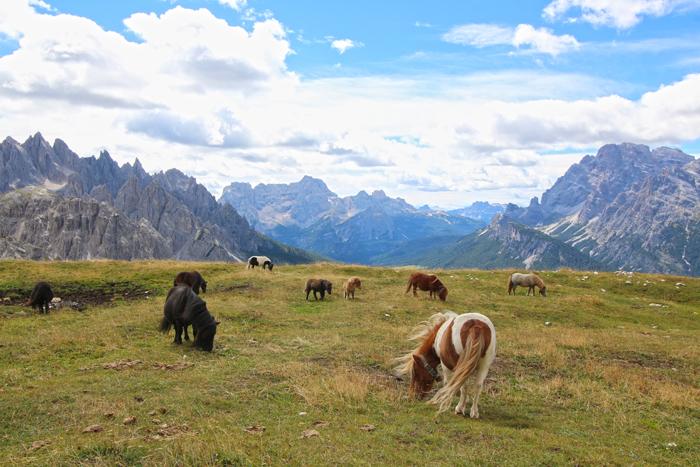 Mini Ponys Südtirol