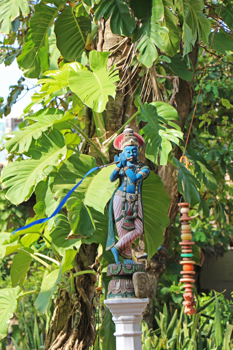Garten im Icebear, Negombo