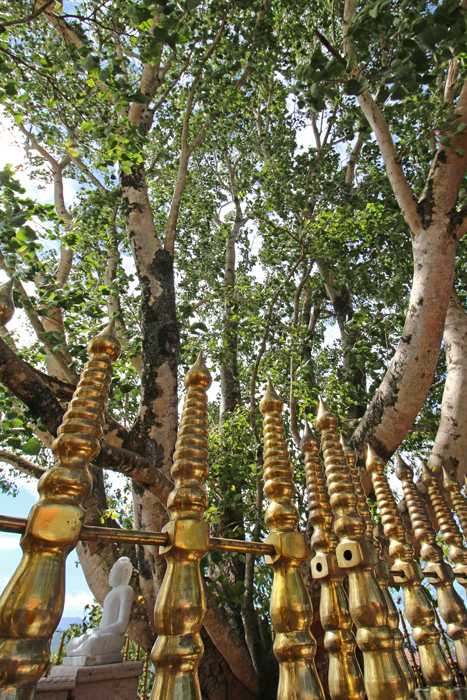 Heiliger Baum am Bahiravokanda Vihara