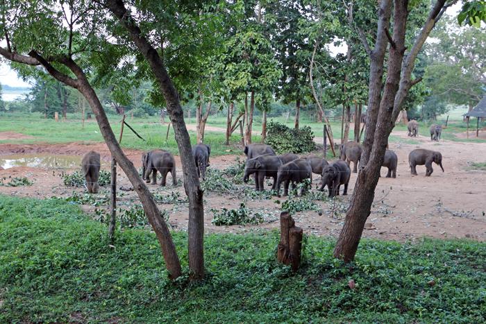 Elephant Transit Home, Sri Lanka