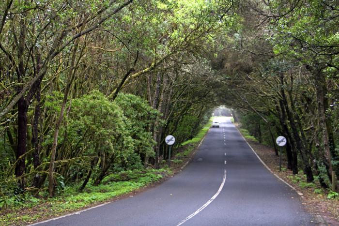 Straße durch den Lorbeerwald im Nationalpark Garajonay