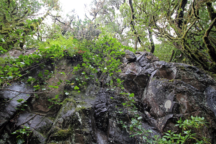 Steinwand im Nationalpark Garajonay