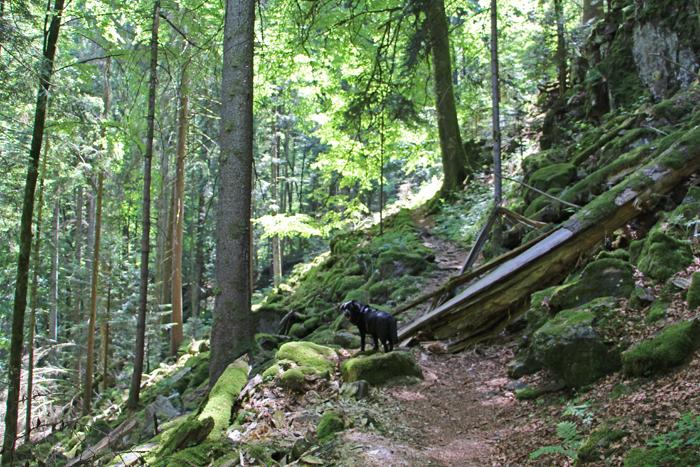 Wandern mit Hund im Bannwald