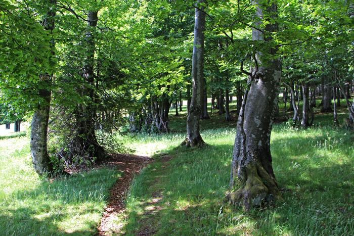 Märchenwald auf dem Kandel