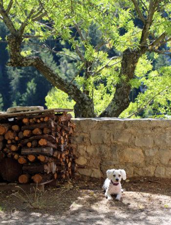 Hund in Südfrankreich