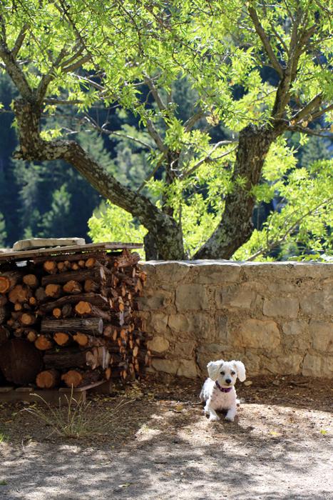 Hund in Brantes, Südfrankreich