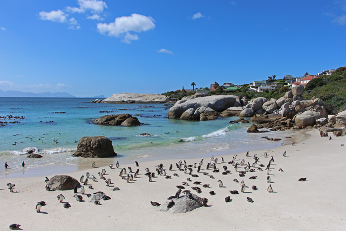 Boulders Beach, Südafrika von Transglobalpanparty