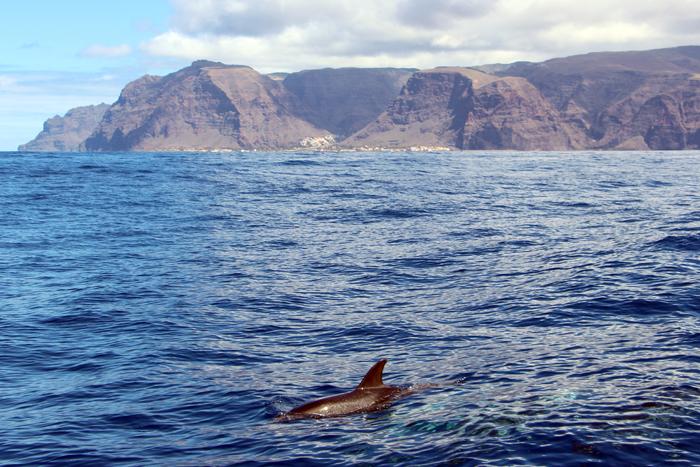 Delfin La Gomera