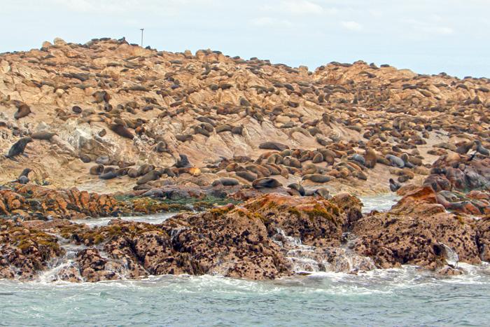 Robben Dyer Island