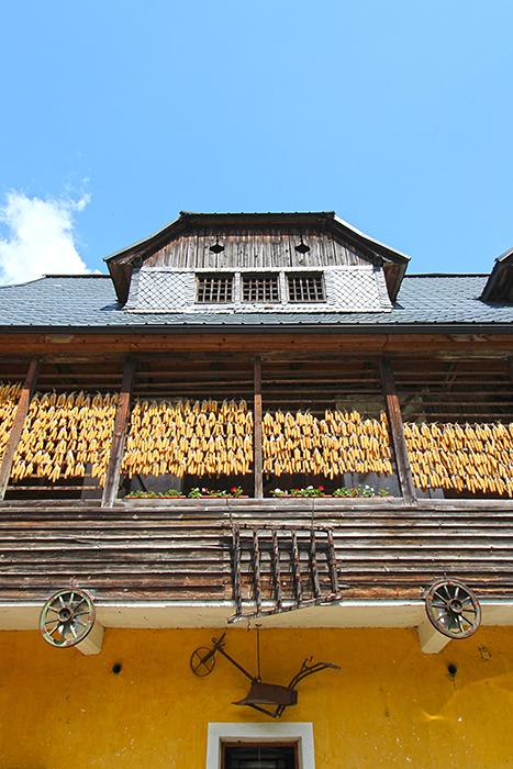 Slow Food in Kärnten - Weißer Landmais im Gailtal