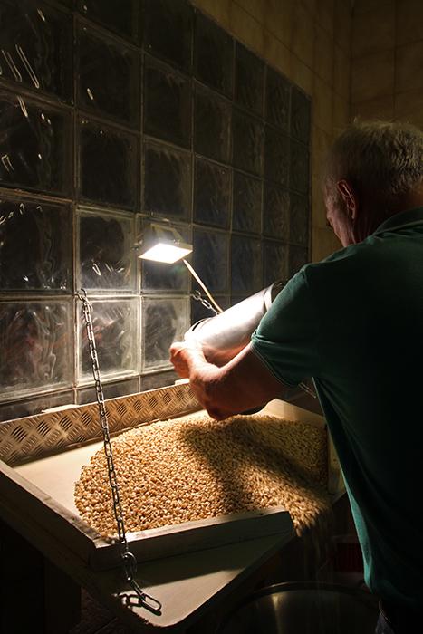 Weißer Landmais wird von Hand geprüft