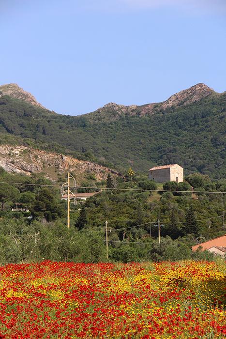 Mohnfeld auf Elba
