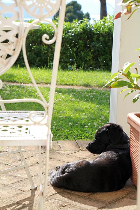 Hund im Hotel Santo Stefano auf Elba