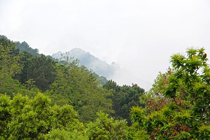 Wald am Monte Capanne
