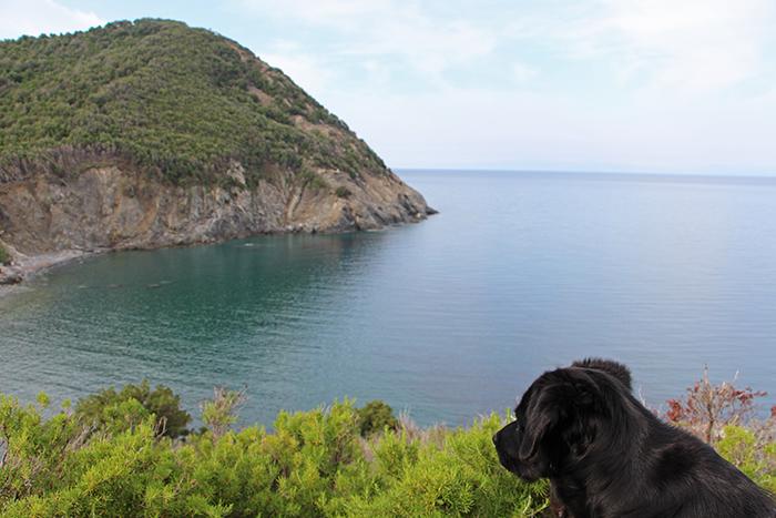 Hund auf Elba