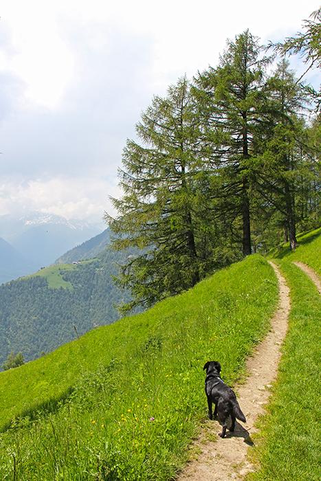 Wandern mit Hund auf dem Meraner Höhenweg