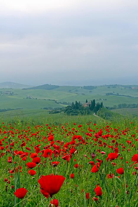 Val d'Orcia, San Quirico, schönste Fotomotive in der Toskana