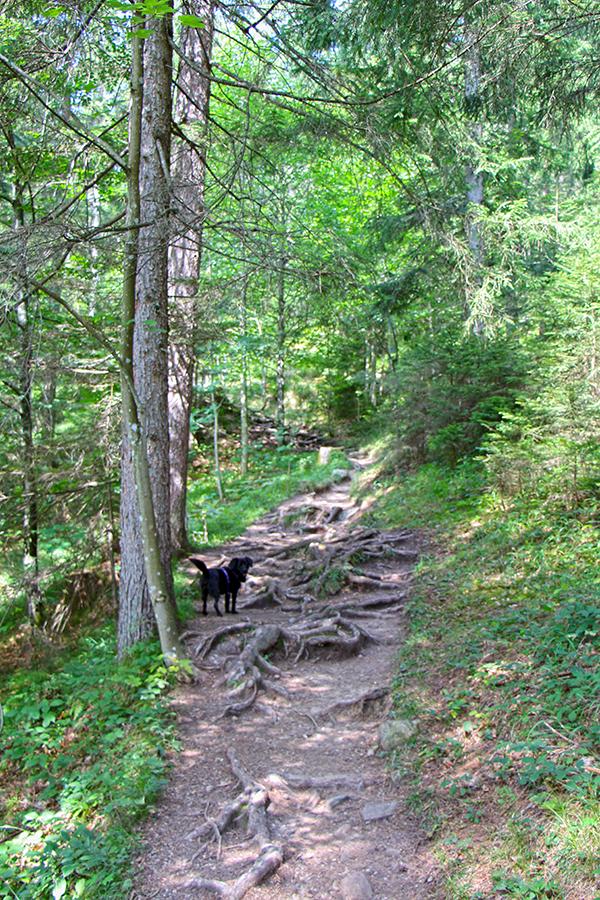 Hund am Wanderweg 45a Richtung Walleralm, Tirol