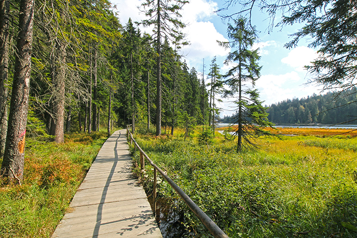 Barrierefreier Wanderweg um den Großen Arbersee im Bayerischen Wald