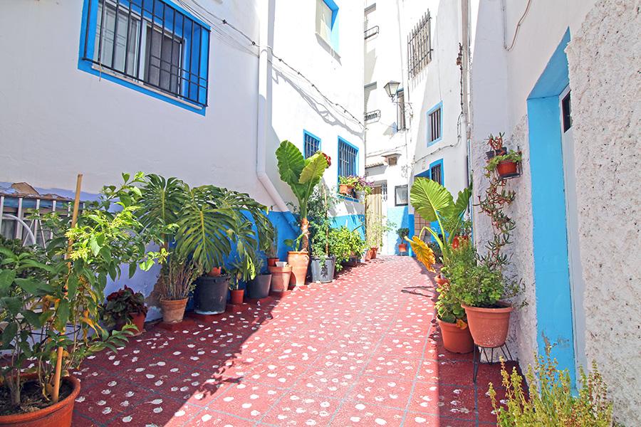Pflanzen in der Altstadt von Chelva
