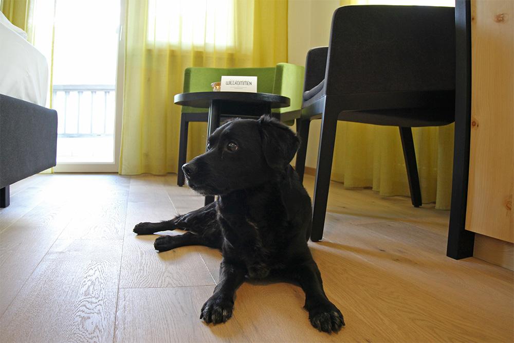 Hunde erlaubt im Hotel Sand, Tschars