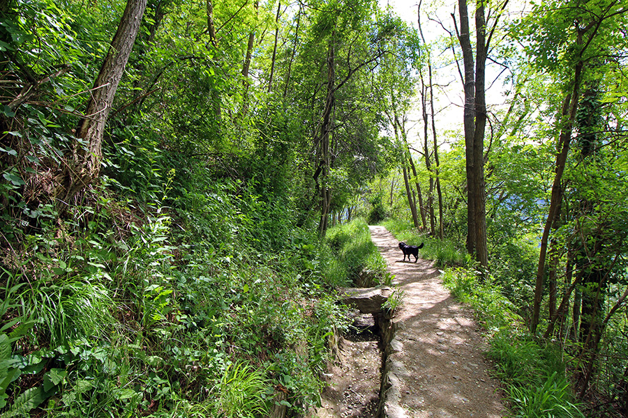 Wanderung mit Hund am Waalweg von Tschars zum Schloss Juval