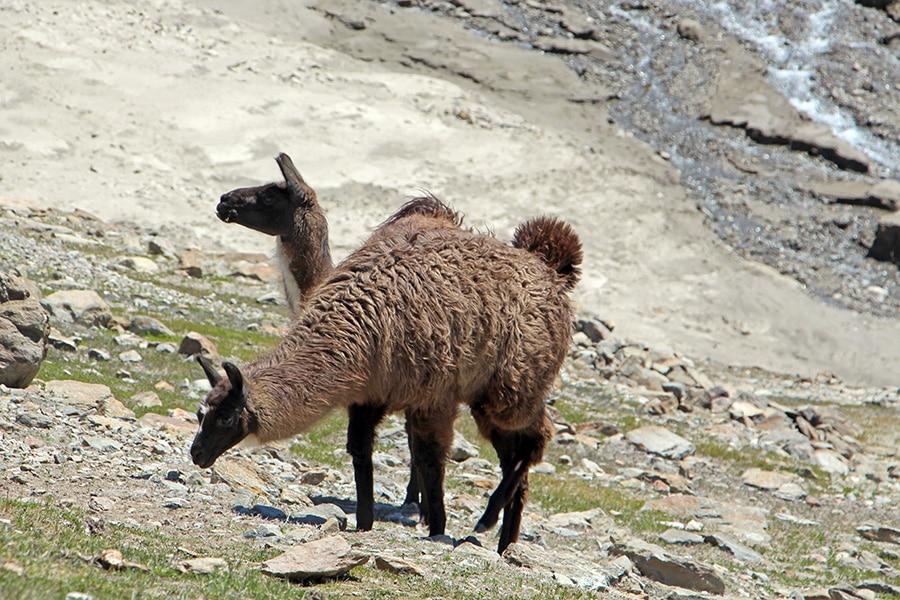 Lamas Vernagt Stausee