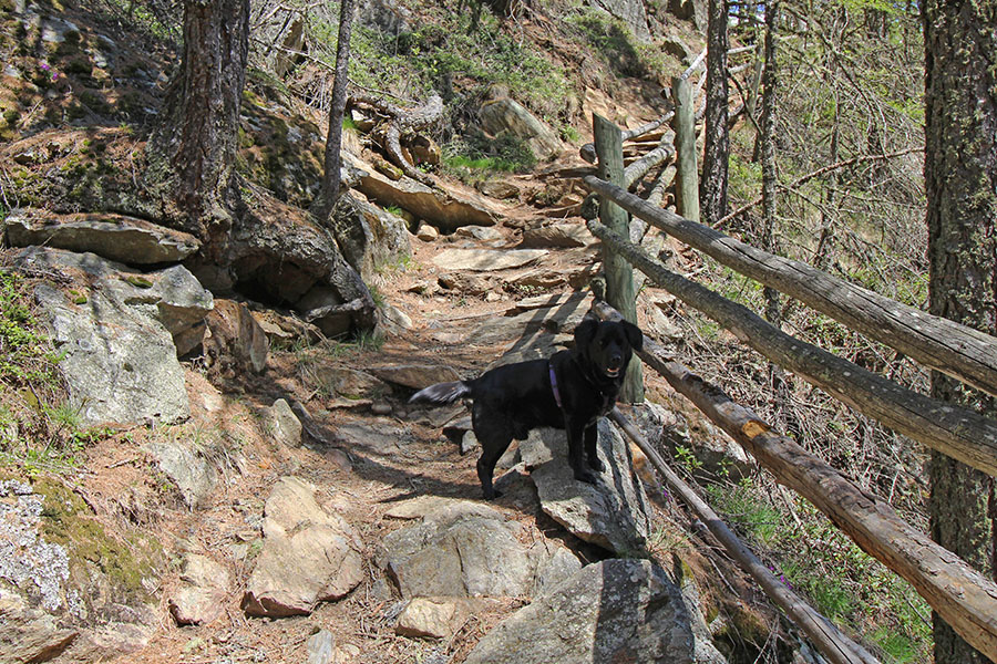 Hund auf dem Wanderweg