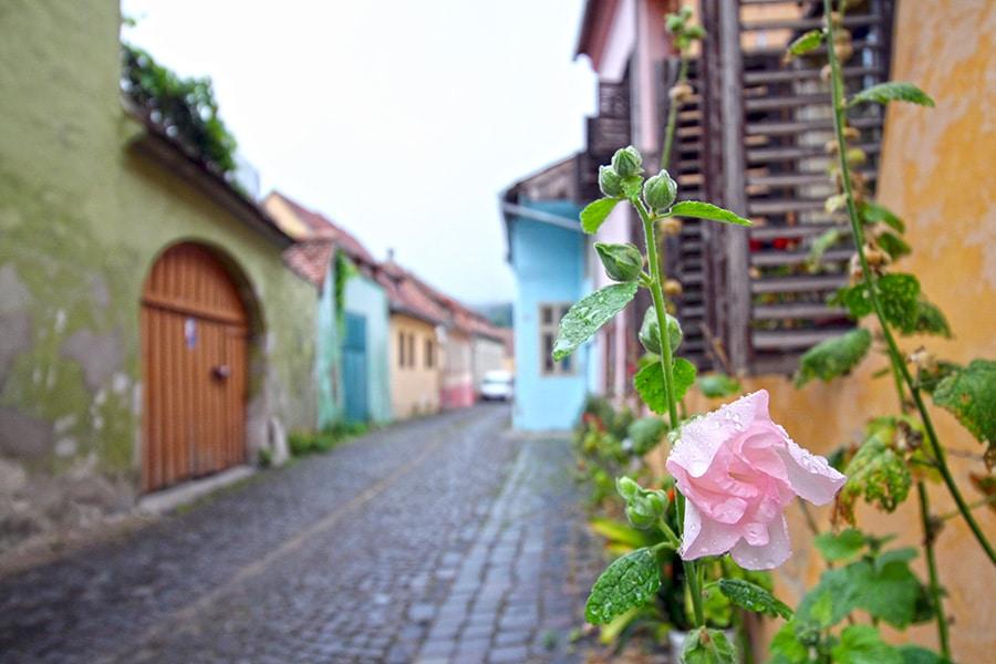 Gasse mit Blumen in Sighisoara / Schässburg