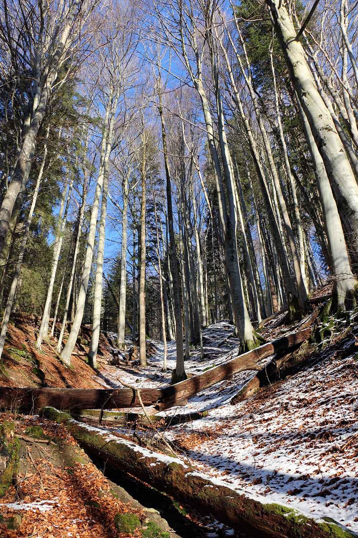 Wald am Leeberg Höhenweg, Tegernsee